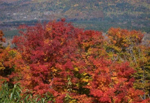 Fall Guide 2018: Previewing every fallish thing in New Hampshire