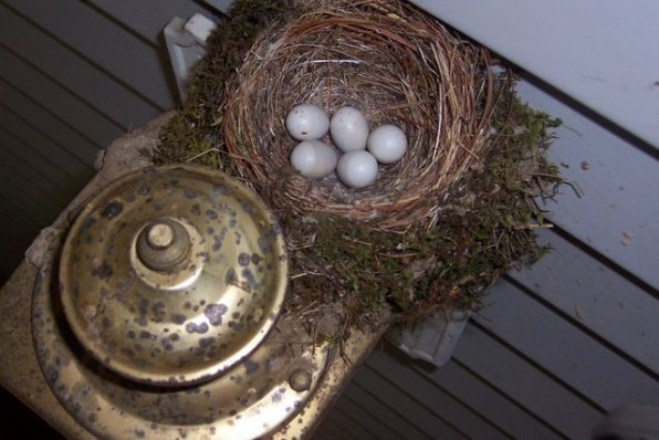 Well, would you look at those warbling vireo eggs on Paul's porch. What will become of those poor abandoned eggs?