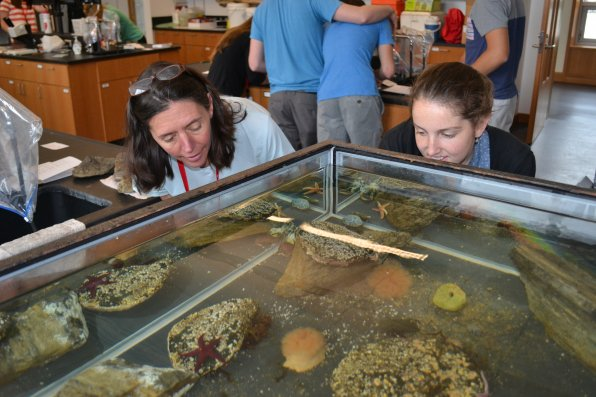 Marine biology teacher Marla Jones scopes out the holding tank with intern Molly Nickerson just one day after capturing the little critters from a tidal pool in New Castle.
