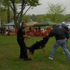 Bark in the Park makes a triumphant return