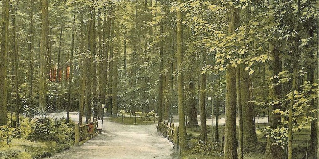 """It's just like the old saying goes, you can't see the park through this forest. That's mostly because this image of Rollins Park features dozens of what reader Earl Burroughs – who sent us the picture – calls """"magnificent pine trees,"""" many of which were ultimately lost in the hurricane of 1938. It made the park much more parky and way less foresty (apologies for boring you with scientific terminology)."""