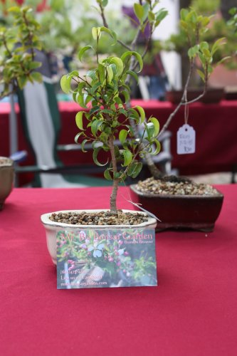The bonsai trees from Mr. B's Bonsai Garden at the arts market were both cute and adorable. Business card shown for scale.
