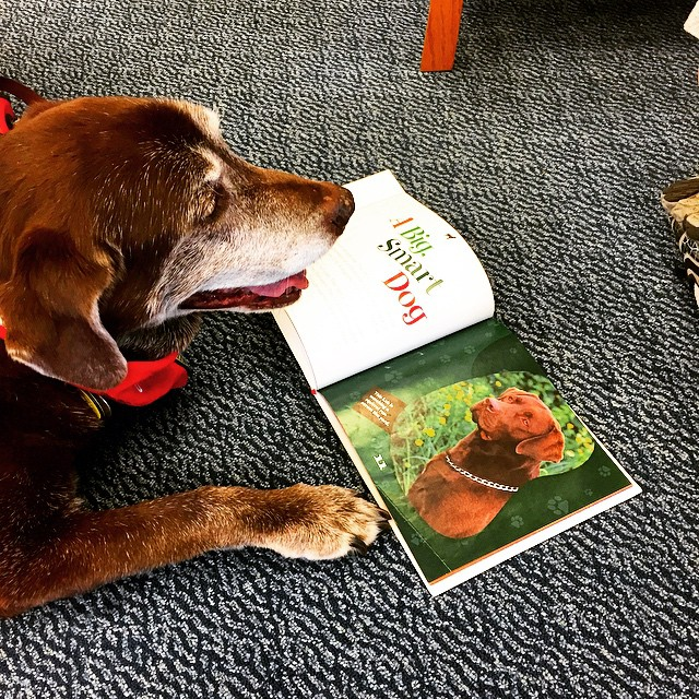 Who said you can't teach an old dog new geneology research techniques? Someone who didn't know stuff, that's who. Because this is Lily, the Concord Public Library's reading dog (she is part of the library's Paws for Pages program as a therapy dog) brushing up a bit on her own geneology during a break at work. Thanks for the pic, @concordnhlibrary! Don't forget to tag us when you post, readers – it's #concordinsider. We'll find the best pictures and put them here!