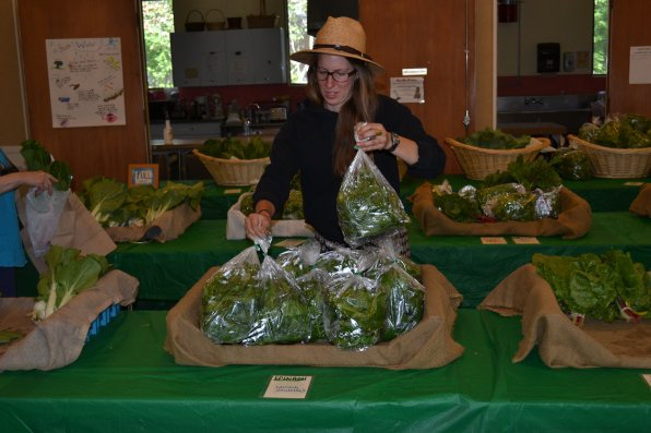 Sarah Hansen refills one of the spinach baskets before more CSA members arrive to pick up their share.