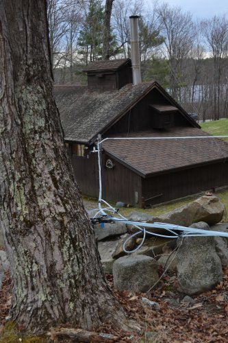 The tubing system that leads sap straight into the sugarhouse.