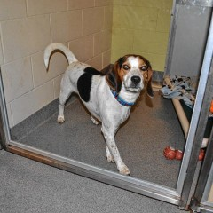 SPCA to host open house, wish list drive on Thursday