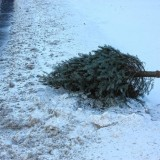 Want to get rid of your tree? Put it out at the curb