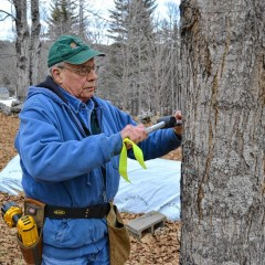 Before sap starts flowing from the maple trees, you've got to tap