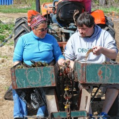 We helped plant strawberries at Apple Hill