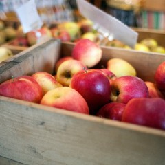 Picking schedules for Concord's apple farms