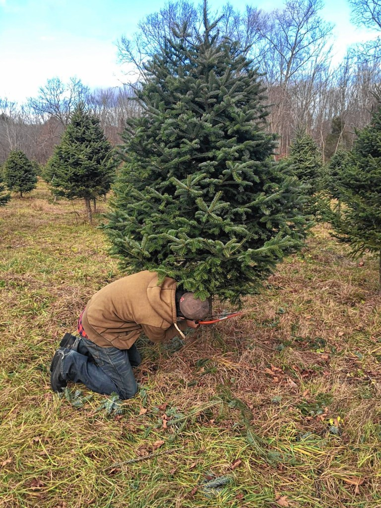 Go Try It: Cut down a Christmas tree at Rossview Farm - The ...