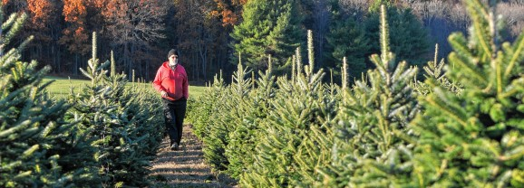 Need a  tree? Here are some places to get one