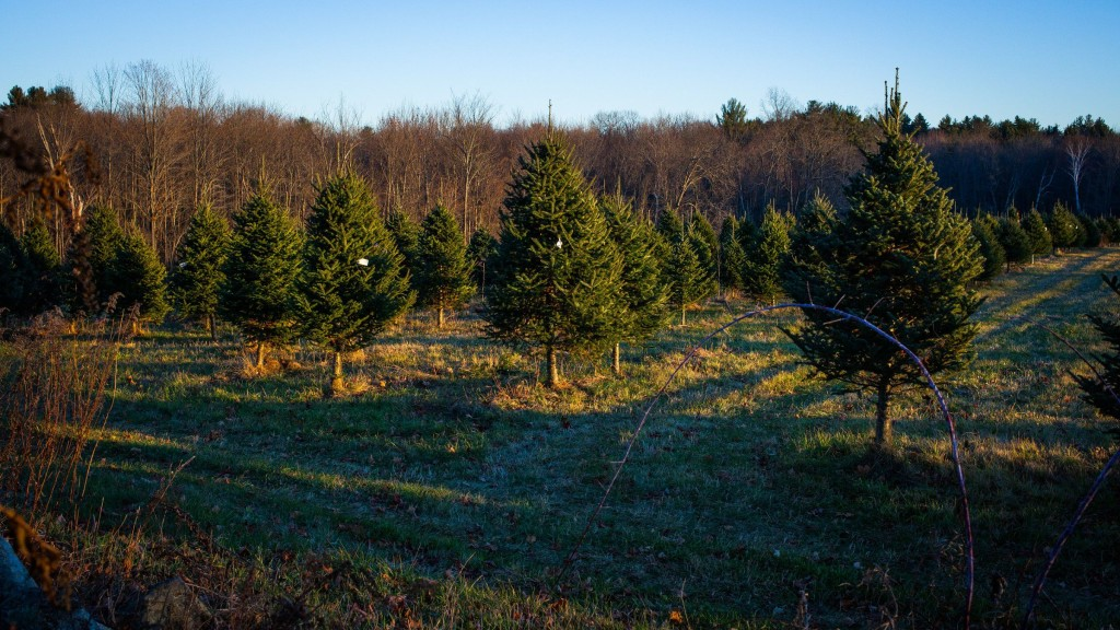 Need a tree? Here are some places to get one - The Concord Insider