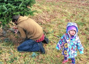 Go Try It: Cut down a Christmas tree at Rossview Farm