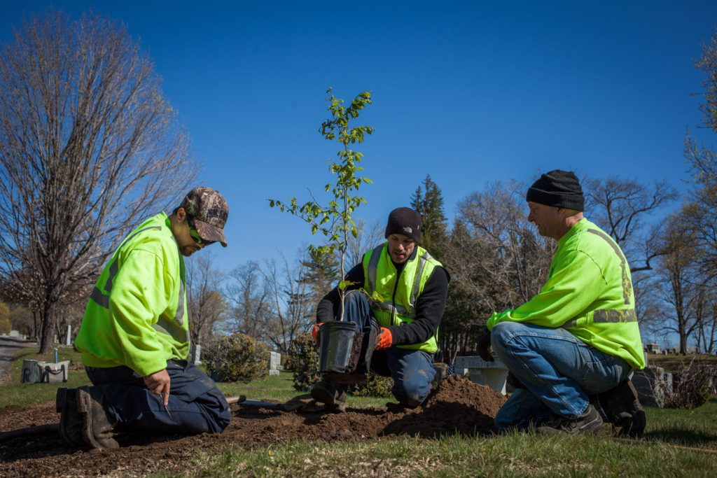 From left: Concord tree crew members Ben St. Amand, Ryan Rambeau and Jon Fisher plant an American beech sapling at Blossom Hill Cemetery last year.