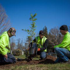 Help keep Concord beautiful on Earth Day