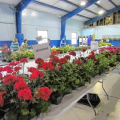 We found a couple plant sales coming up