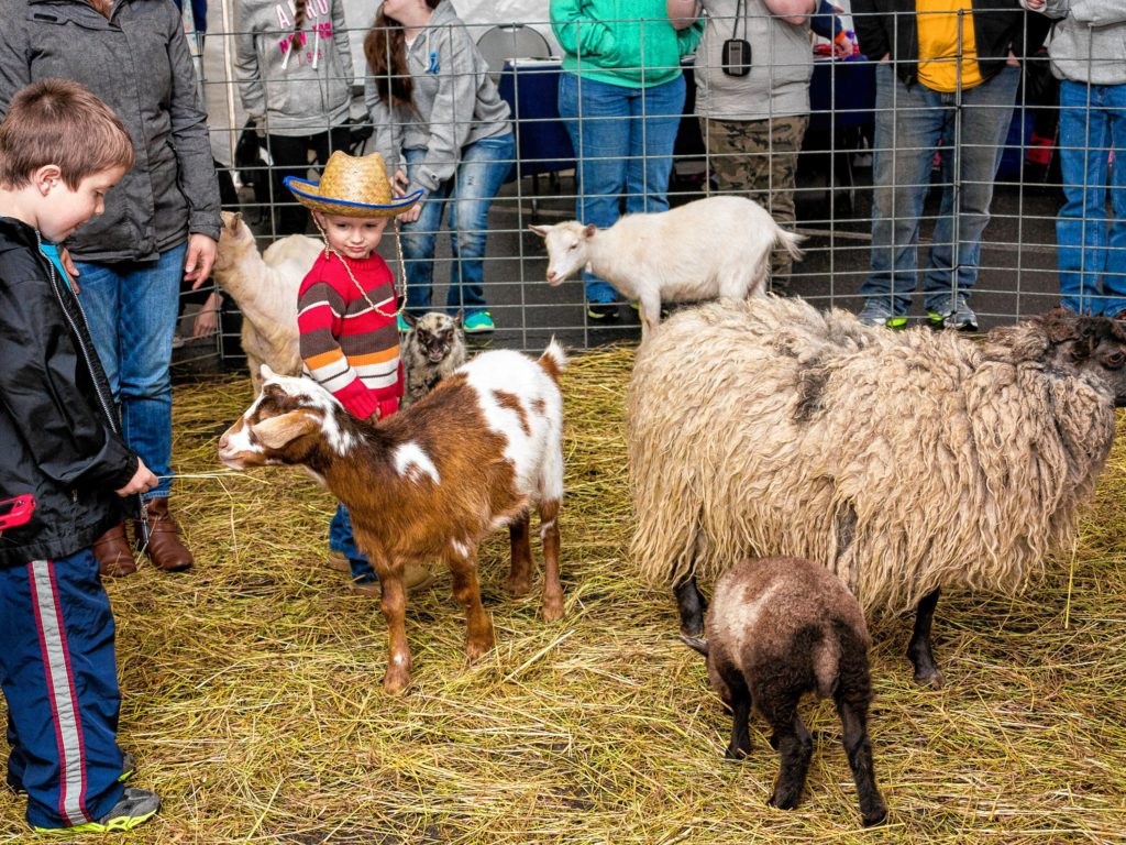You'll be able to pet a bunch of cute barnyard animals at the Concord Food Co-op's Spring Into Healthy Giving event on Saturday. COURTESY