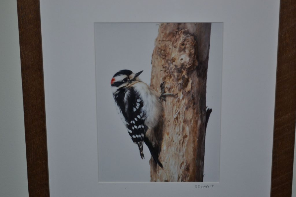 Sherie Dowsett is currently showing her photography at the N.H. Audubon McLane Center through June. Tim Goodwin