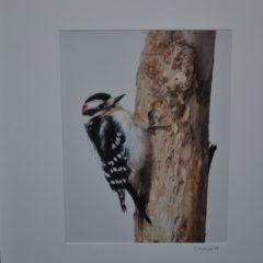 On Display: New photography exhibit at Audubon McLane Center