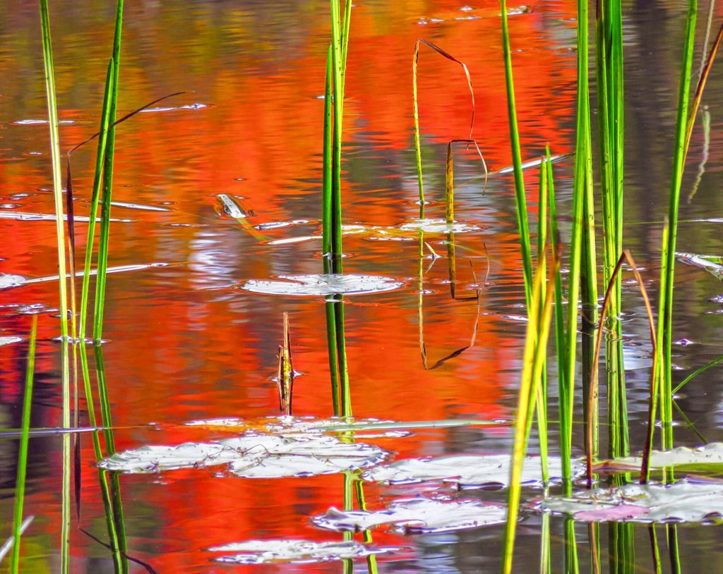 Red Water Reflections, Mill Pond. COURTESY