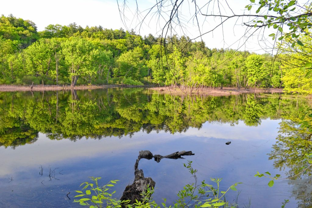 We took a walk through the Merrimack River Outdoor Education and Conservation Area adjacent to the Society for the Protection of New Hampshire Forests. TIM GOODWIN / Insider staff