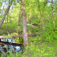 Go Try It: Take a hike on the Forest Society property