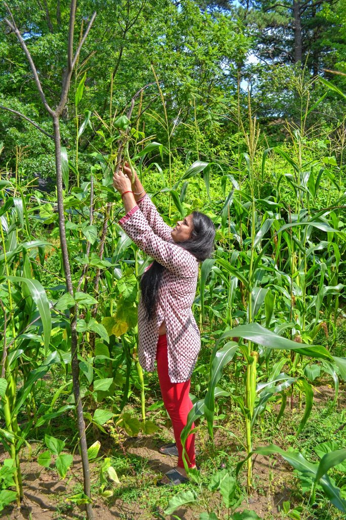 Hari Adhikari tends to her garden at Jim Plato's home on Branch Turnpike. TIM GOODWIN / Insider staff