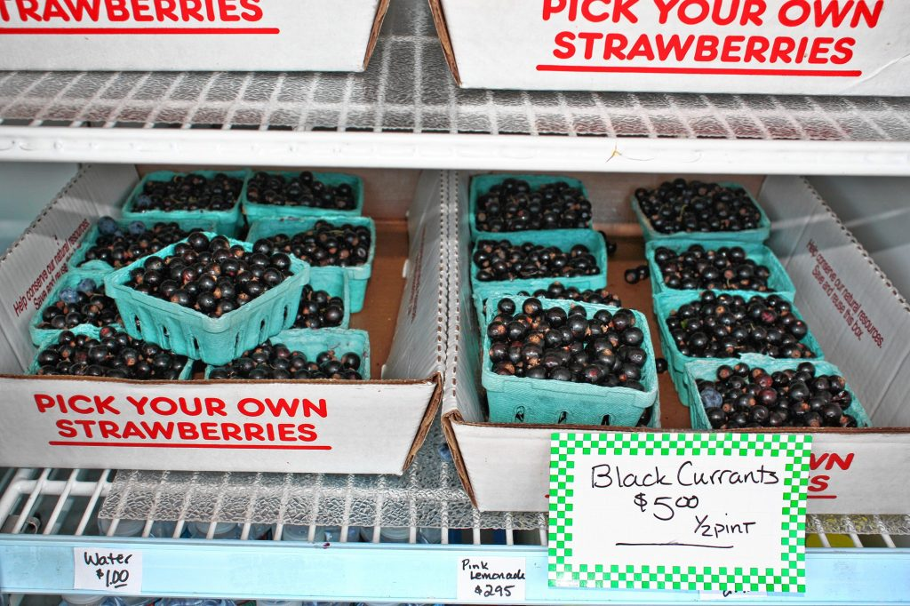 Apple Hill Farm has plenty of fresh-picked black currants for sale. JON BODELL / Insider staff