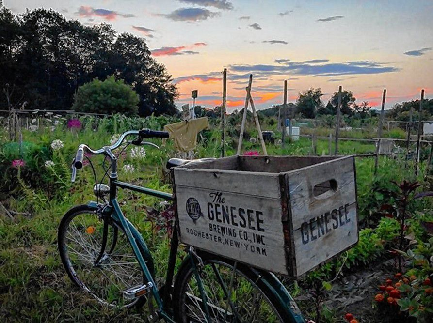 There have been some pretty nice sunsets around here this summer, and there's no shortage of photos on Instagram to prove it. We liked this one, by user @michaelpmurphy, taken at the community gardens on Clinton Street. Something about the sky, the old bike with the box on the back and the floral surroundings just gives a quintessential New England summer feel, don't you think? Instagram user @michaelpmurphy