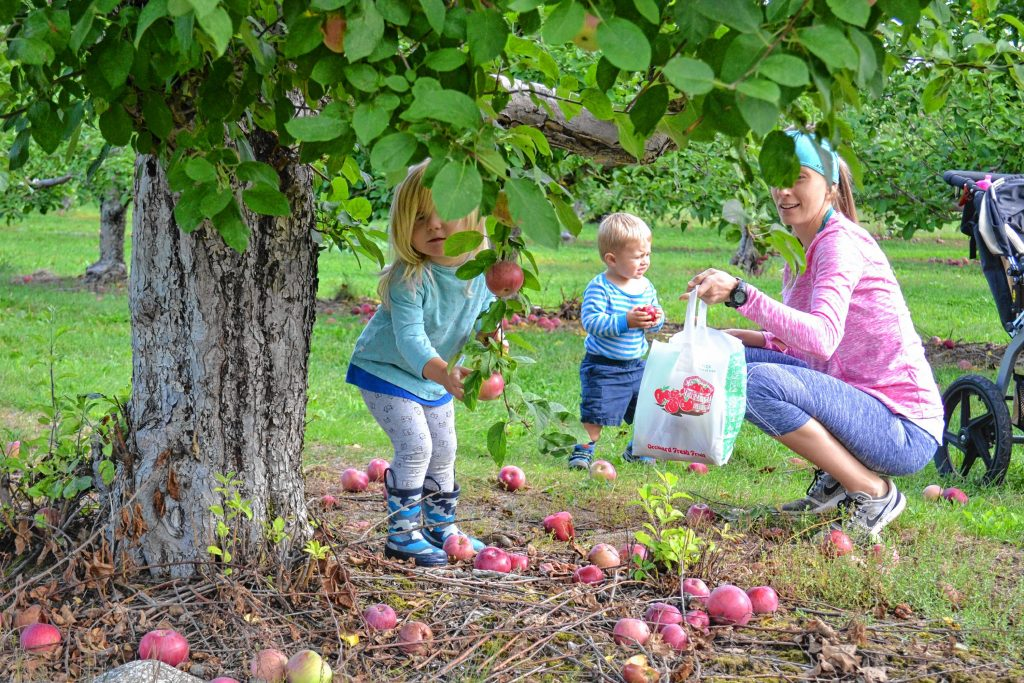 Melissa Gravilla and her children Caroline and Colby enjoy a day of apple picking at Carter Hill Orchard. TIM GOODWIN / Insider staff