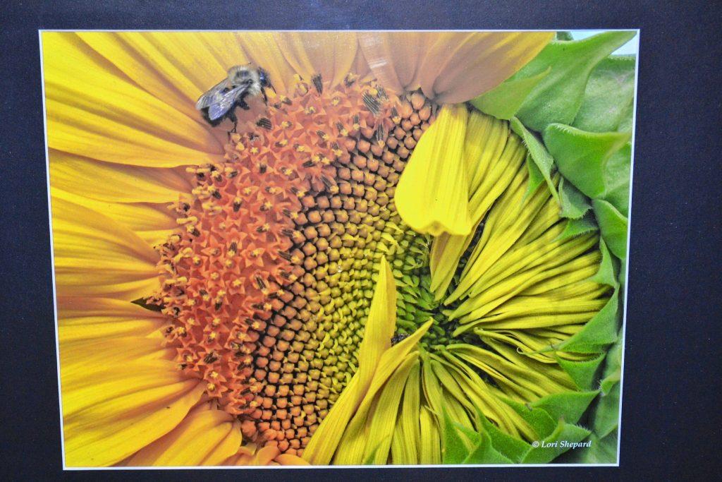 Pollen Pit Shop, Lori Shepard. TIM GOODWIN / Insider staff