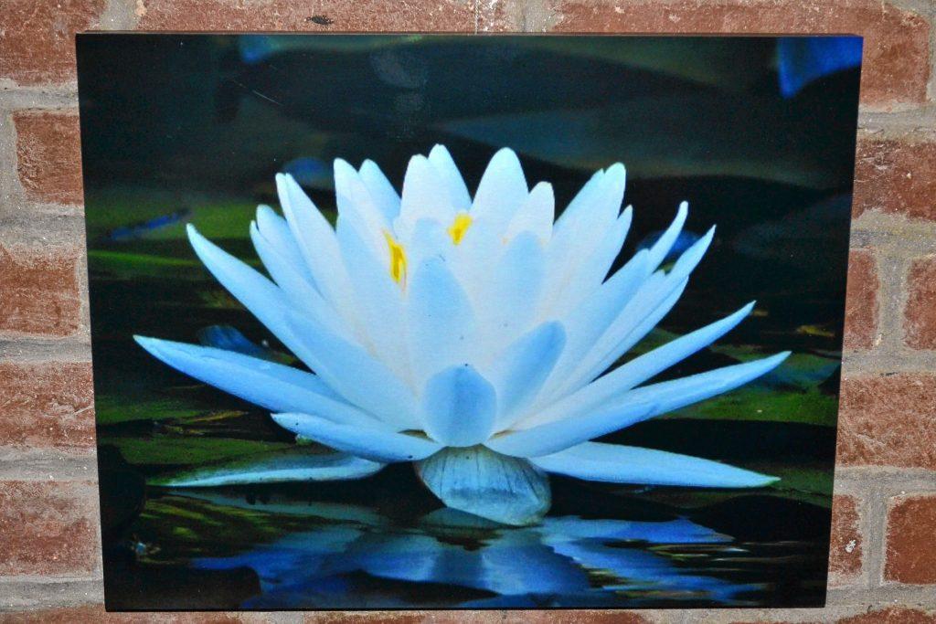 Water Lily, Robin White. TIM GOODWIN / Insider staff