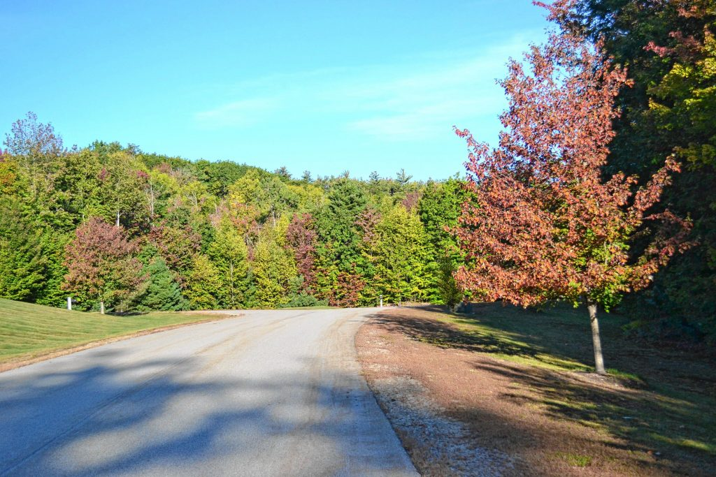 We found some signs that foliage season is upon during a leisurely drive around Concord. TIM GOODWIN / Insider staff