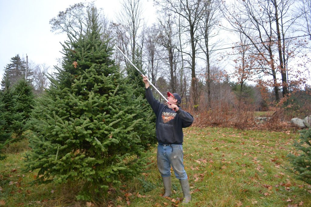 Behind the scenes at an Oregon Christmas tree empire