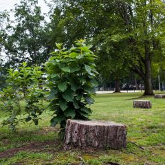 Help restore Rollins Park by taking part in the Adopt a Tree program