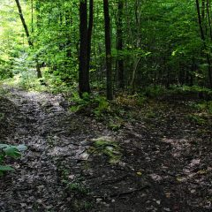 Take an easy hike on the West End Farm Trail