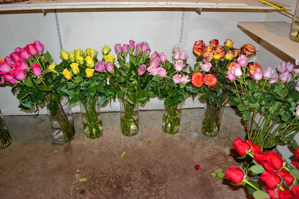 McLeod Florists has quite the selection of roses for Valentine's Day. TIM GOODWIN / Insider staff