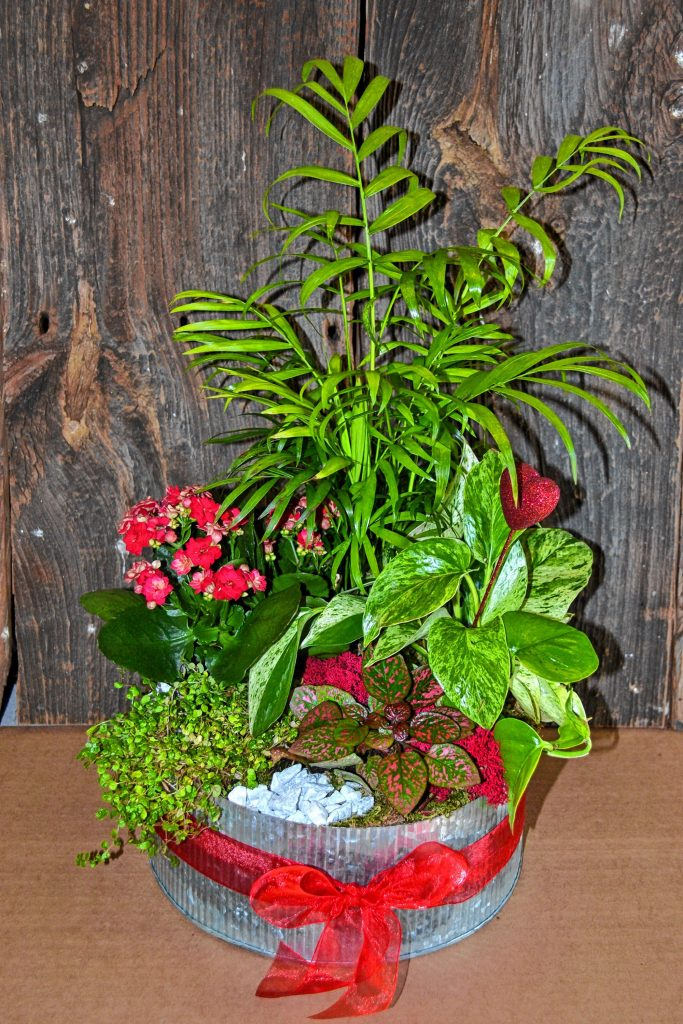 This plant arrangement from Cole Gardens is an alternative to flowers. TIM GOODWIN / Insider staff