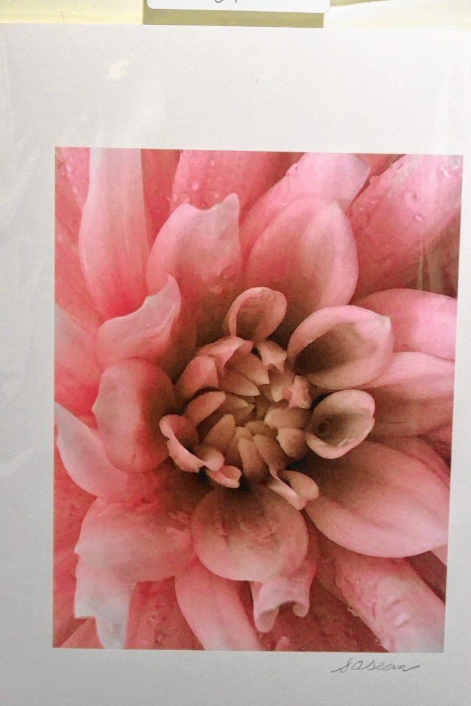 Pink Flower, Lynne Guimond Sabean. TIM GOODWIN / Insider staff