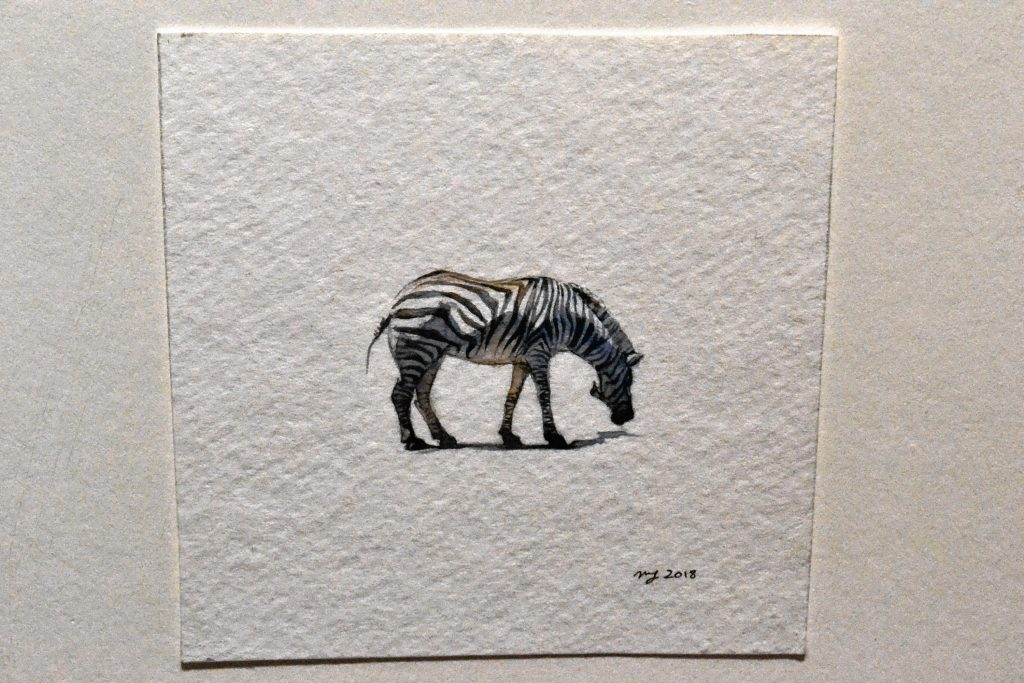 Zebra, Maggie Green. TIM GOODWIN / Insider staff