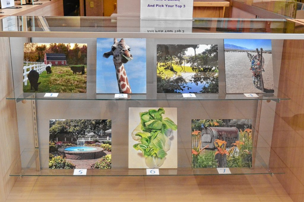 The NHTI library staff is hosting a third annual photo contest through Sept. 16. So visit the library and cast your vote. TIM GOODWIN / Insider staff