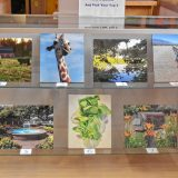NHTI library staff is hosting a photo contest