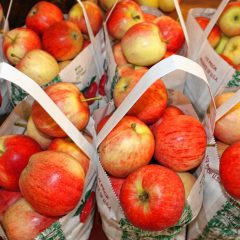 It's that time of year: Get out there and pick some apples in Concord