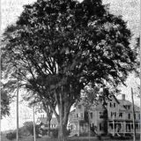 Blast From the Past: Recalling the city's first Arbor Day celebration