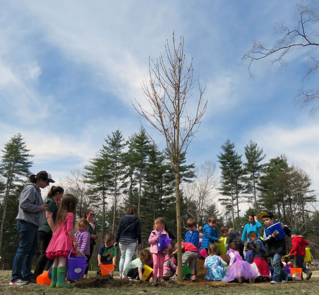 Woodside School preschool students help plant a sugar maple at Rollins Park. After losing 200 pine trees to invasive bugs last year, Concord is reforesting the park with a variety of trees this spring.  Caitlin Andrews