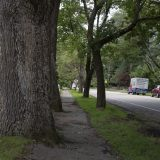 Sustainable Street Tree Program shows Concord's commitment to urban forestry