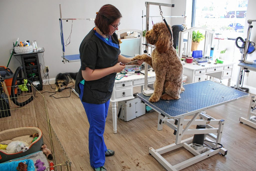 Chelsea Olivera gives Roma the goldendoodle a little makeover at Pawtopia, winner of the Cappies award for Best Dog Groomer.  JON BODELL / Insider staff