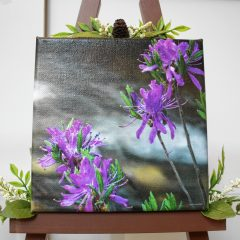 On Display: Nature photos on canvas by Christine Wrazen at NHTI