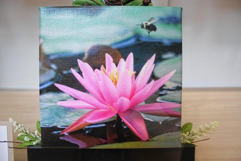 Waterlily Serenity, by Christine Wrazen.